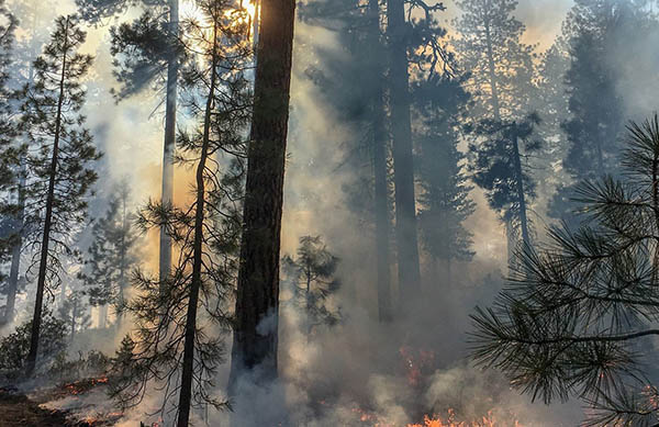 Herbal Support for Wildfire Smoke
